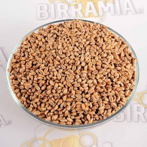 Malt Grain Wheat (Weizen) 5 kg, Crisp Malting