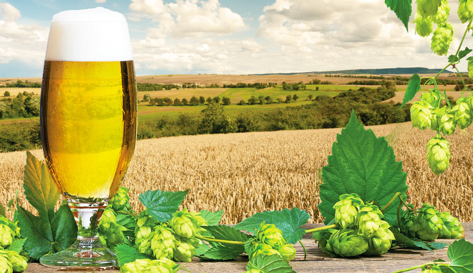 Session IPA - Ricetta per birra con tecnica All Grain